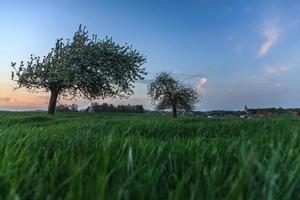 Sonnenuntergang auf dem Land mit Blütenbäumen