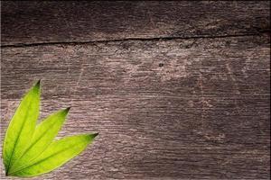 Blätter auf hölzernem Hintergrund foto