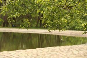 noch Wasser im Wald foto