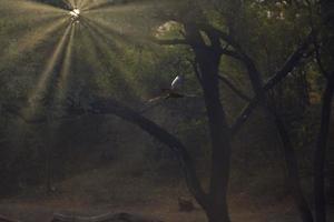 Sonnenstrahlen in einem dunklen Wald