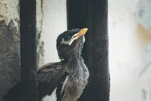 Nahaufnahme eines Vogelbabys
