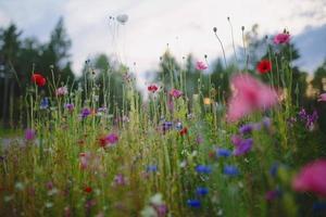 blaue und rote Blumen unter bewölktem Himmel während des Tages