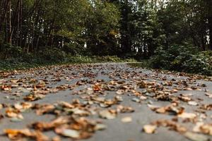 Wurmperspektive von getrockneten braunen Blättern
