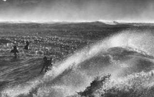 Sydney, Australien, 2020 - Graustufen von Menschen, die auf Wellen surfen