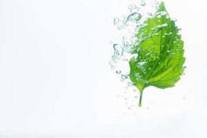 grünes Blatt und Blasen im Wasser