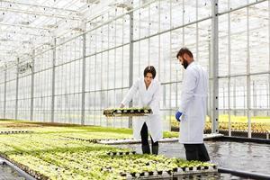 Mann und Frau in Laborgewändern arbeiten mit Pflanzen in einem Gewächshaus