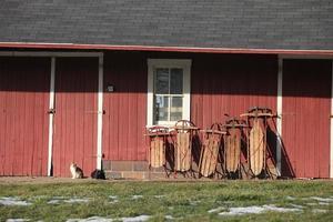 fünf braune hölzerne Schneeschlitten auf roter Wand mit zwei Katzen