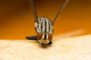 Makro fliegen, auf das Auge fokussieren