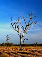 verwitterter Baum auf einem Feld foto