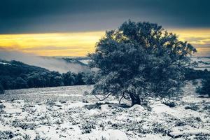verschneite Landschaft und ein Baum