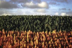 grüne und herbstliche Bäume