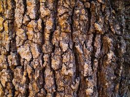 strukturierte Baumrinde
