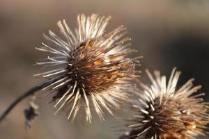 Nahaufnahme von getrockneten Wildblumen