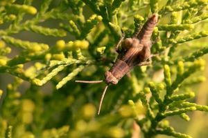 Nahaufnahme einer Heuschrecke auf einer Pflanze