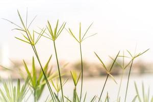 Gras und See im Sommer
