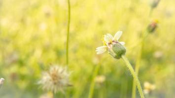 kleine weiße Blumen auf gelbem Hintergrund