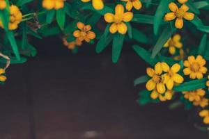 Sommerfrühlingsrahmen aus kleinen gelben Blüten foto