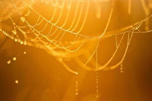 Spinnennetz mit Tau foto