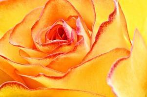 abstrakte gelbe schöne Rose foto
