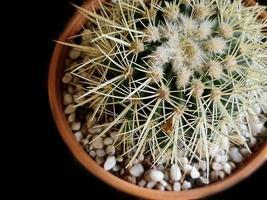 eingetopfter stacheliger Kaktus isoliert auf Schwarz mit selektivem Fokus foto