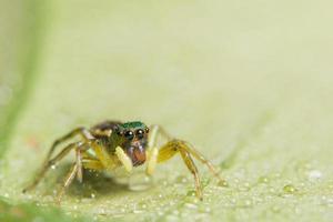Spinne auf einem Blatt, Nahaufnahme