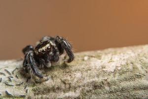 Spinne auf einem Baum, Nahaufnahme
