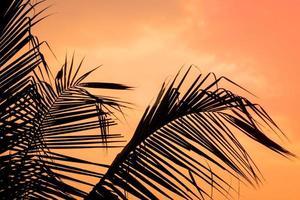 Sonnenuntergangssilhouette von Kokosnussblättern foto