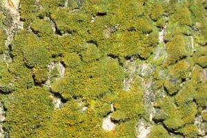 grüner Holzhintergrund