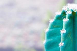 isolierter Kaktus in der Natur