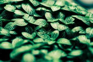 grüner Blättermusterhintergrund