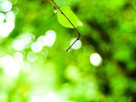 grüner Naturbokehhintergrund