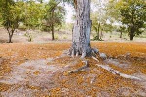 Herbstbaum Stamm Hintergrund foto