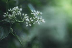 kleine weiße Blumen auf grünem unscharfem Hintergrund