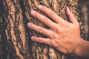 Hand hält an einem alten Baum foto