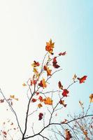 Herbstlaub gegen einen blauen Himmel foto