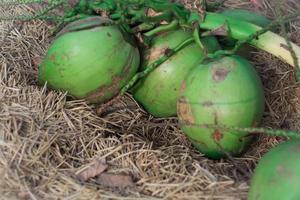 Haufen grüner Kokosnüsse