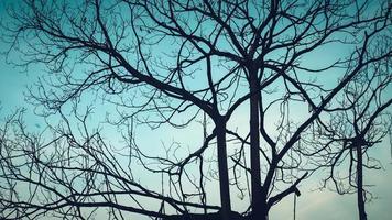 Silhouette eines kahlen Baumes gegen dunklen Abendhimmel foto