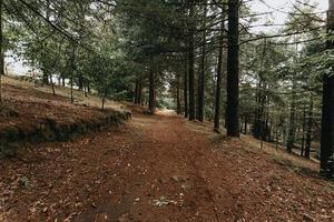 Weg in einem dunklen Wald foto