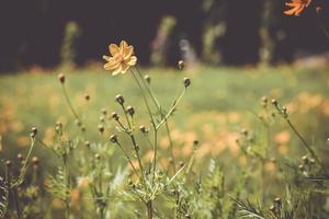 Landschaft mit Blumen, die den Herbst darstellen