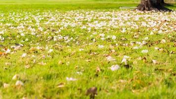 Nahaufnahme einer Rasenfläche