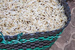 Sojasprossen in einem Korb