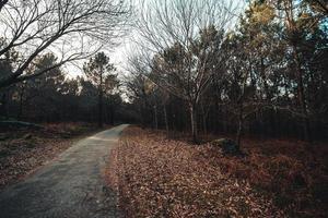 Straße durch den Wald während eines Herbsttages mit Kopierraum