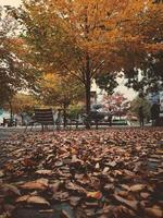 braune Holzbank unter braunem Baum foto