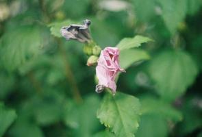 Nahaufnahme einer Blume mit rosa Blütenblättern foto