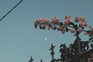 der Mond und eine Blume