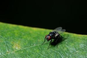 auf einem Blatt fliegen