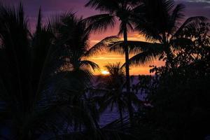 Silhouette von Palmen und einem Sonnenuntergang