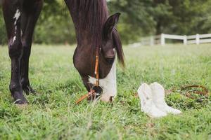Pferd in der Nähe eines Paares weißer Stiefel