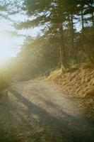 goldenes Sonnenlicht auf einer unbefestigten Straße