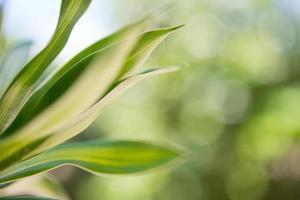Nahaufnahme eines Pflanzenblattes mit Bokehhintergrund foto